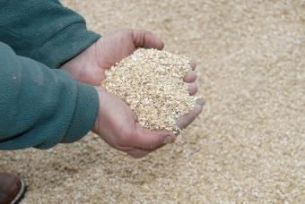 Moist grain treatment with Propcorn NC