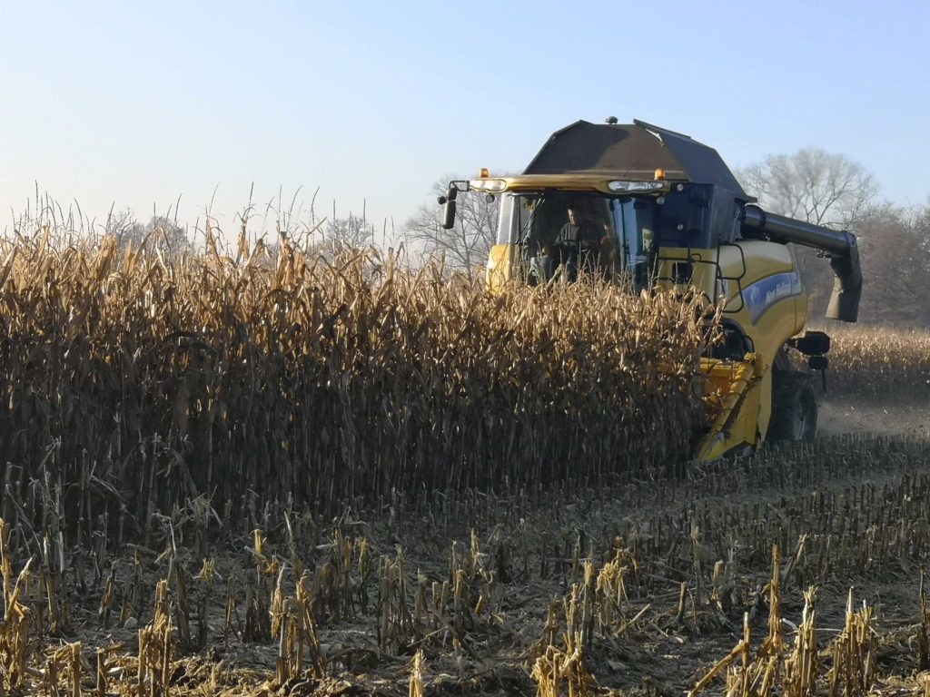 Lee Gilbert provides a maize harvesting service to allow us to offer a complete grain maize package