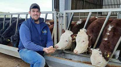 Rob Moore with his beef cattle