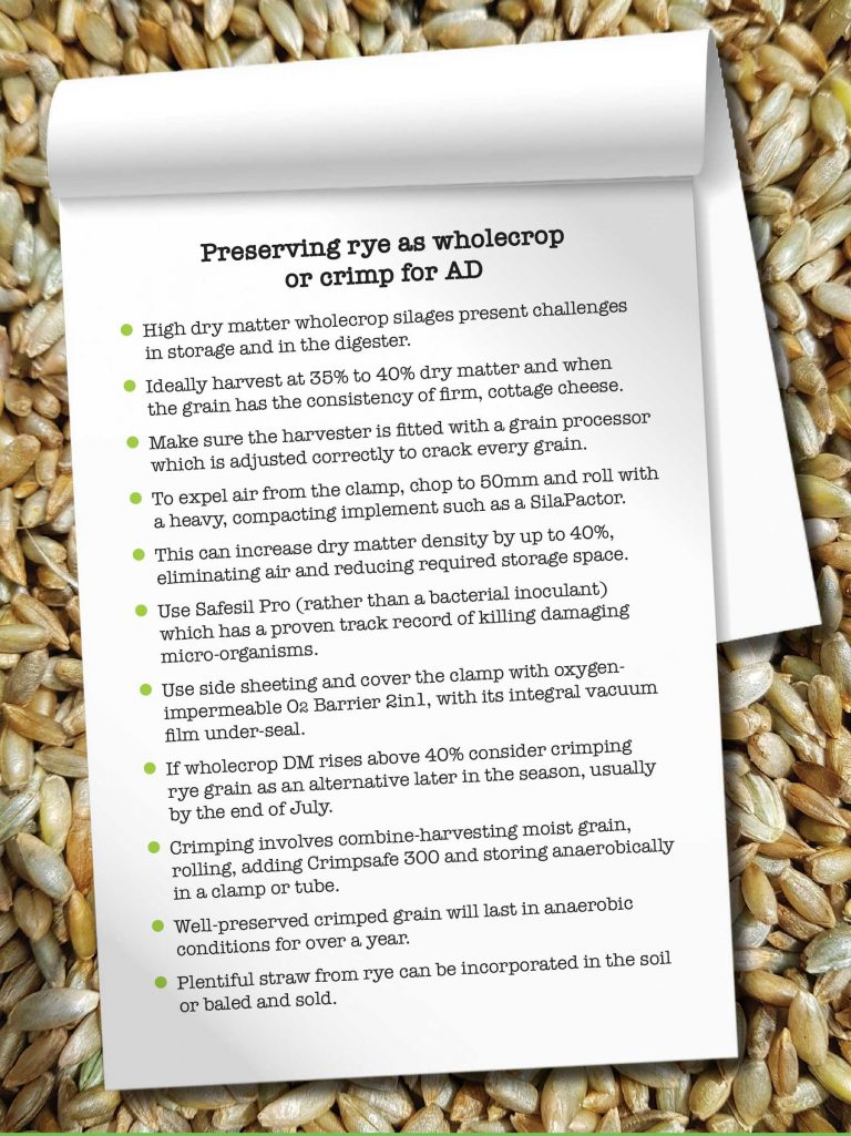 Preserving rye as wholecrop or crimp for AD