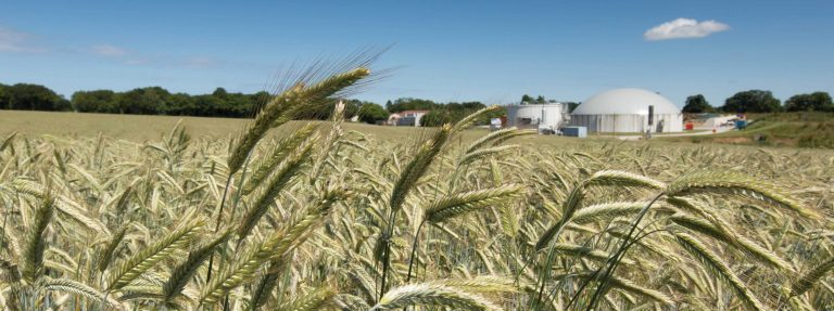 AD plant and rye as an energy crop