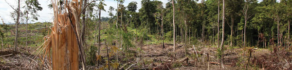 Deforestation on a massive scale often makes way for cultivating protein crops such as soya and oil palm. Transportation and processing adds to their carbon footprint.