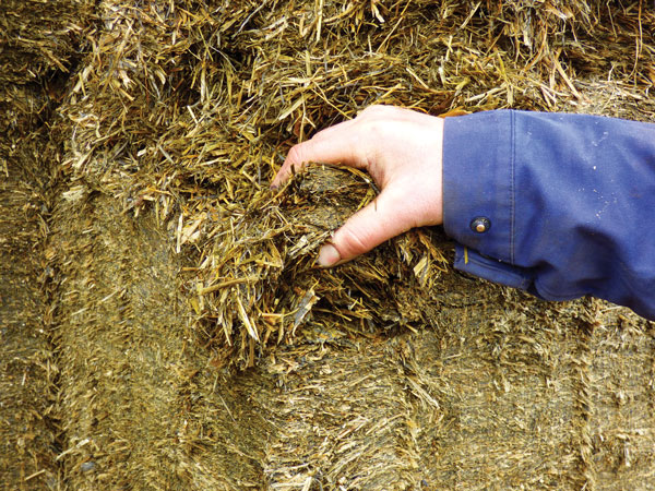 Matt Widdicombe says his silage has never before been so consistently good.
