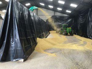 Grain crimping winter barley