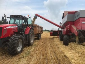 Harvesting 6-row winter barley